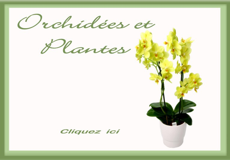 France livraison fleurs livraison par des fleuristes for Livraison fleurs pas cher livraison gratuite